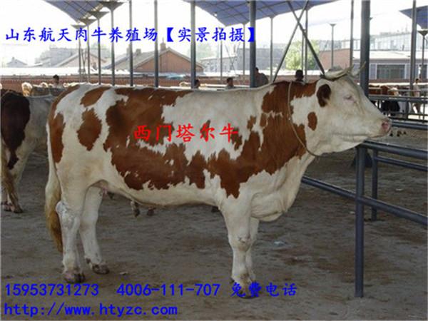 淮南活羊多少钱一斤羊现在多少钱一斤