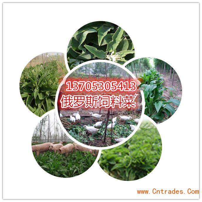 郓城县绿禾种子销售中心