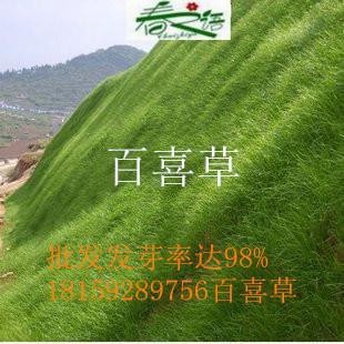 湖南专业的牧草草籽批发供应商
