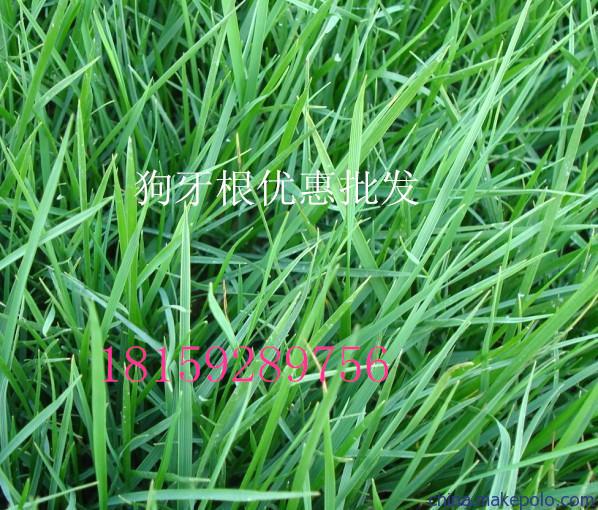湖南常德绿化草籽批发供应