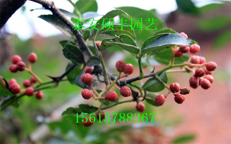花石榴,柿子树,玉兰,山桃,山杏,黑松,红叶小檗球,紫藤,樱桃树,核桃树