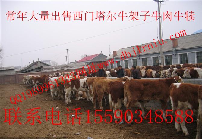 东北肉牛畜牧交易市场 东北黄牛畜牧交易市场 东北西门塔尔牛畜牧交易市场 东北架子牛畜牧交易市场