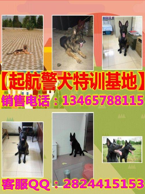都匀地区三个月左右的昆明犬哪里有卖的昆明犬幼崽行情
