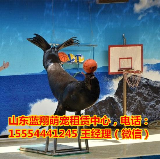 羊驼租赁-动物表演兴平市
