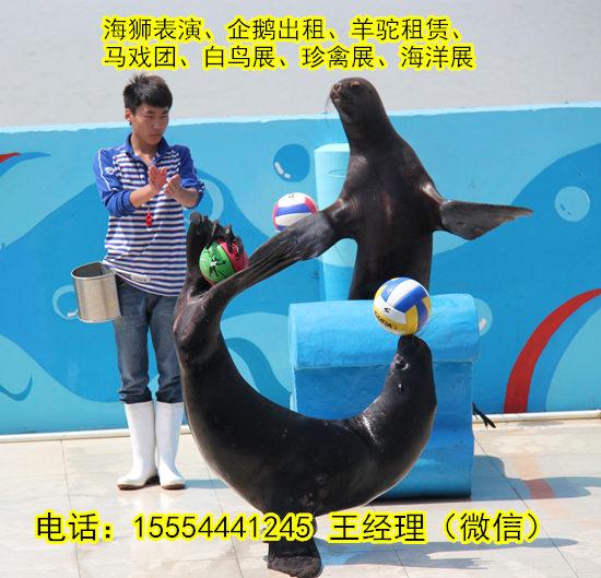水上海狮表演海南省