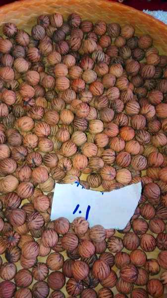 美国猴头核桃-串珠原料-核雕籽料