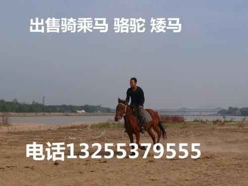 能骑的半血马多少钱一匹青山区哪里卖马信誉高