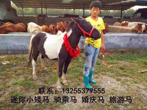 能骑的能骑的马多少钱一匹石拐矿区哪里卖马信誉高