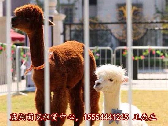 吉林省马戏团表演出租