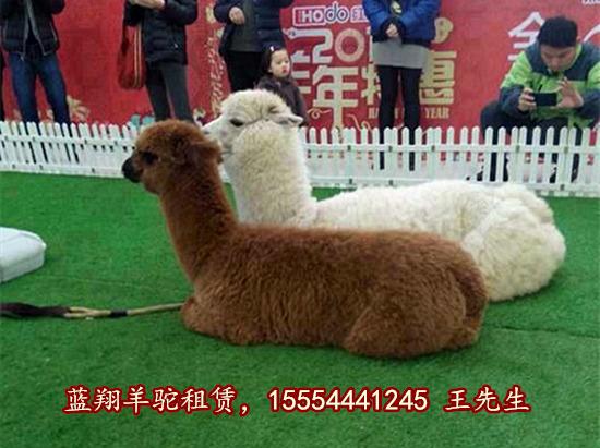 四川省海狮表演租赁