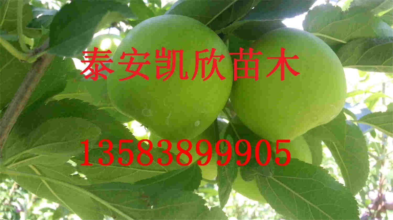 2,栽植密度:黑宝石李树对光照的要求不如桃严格,而对空气湿度要求较