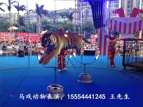 辽宁省大型马戏团表演