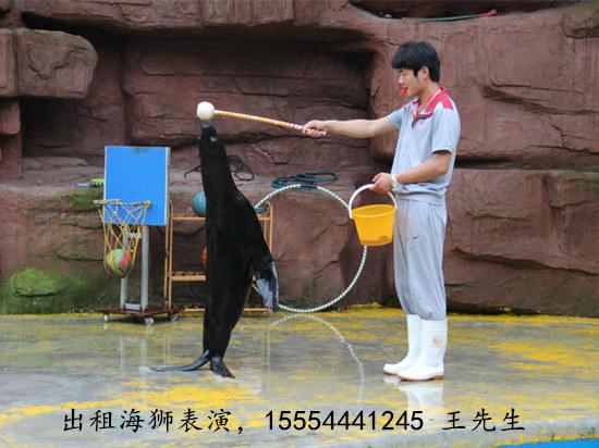 宁波市从事海狮表演