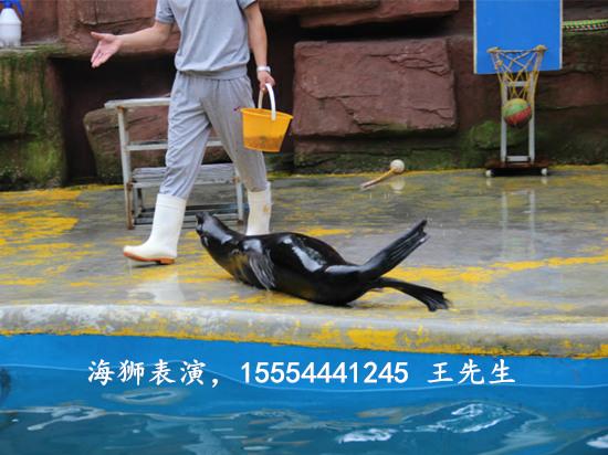 西安市海狮表演文化