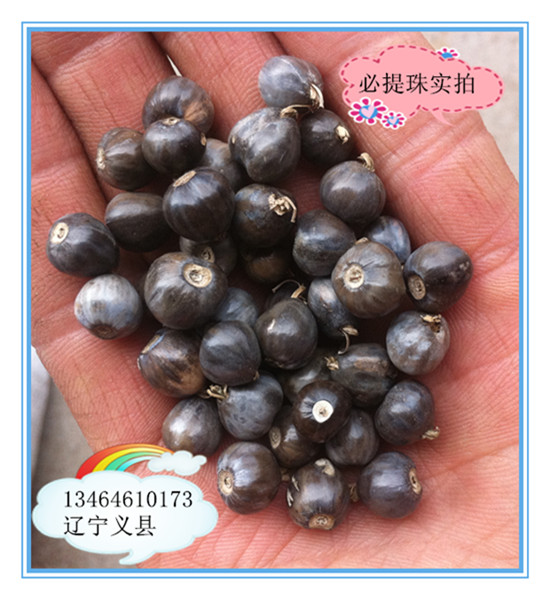 优质串珠门帘珠子植物珠子原料串珠种子出售必提珠又名桃黍子,串珠,陶