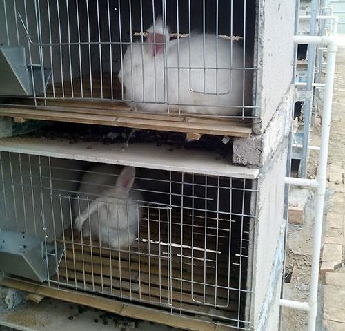 兔子是有生命的小动物
