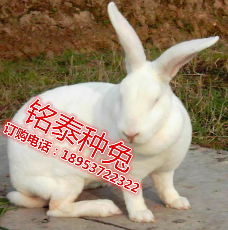 山东省铭泰种兔养殖