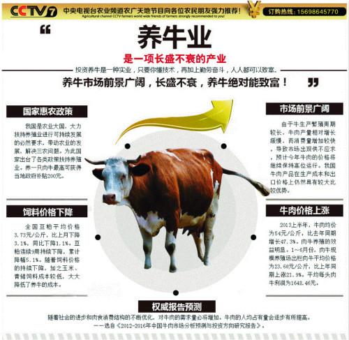 新疆3个月小肉牛价格