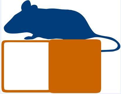 供应大小鼠避暗实验/被动穿梭实验仪器-上海欣软厂家