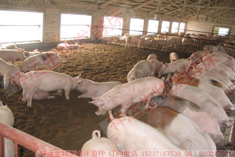 正确认识发酵床养猪
