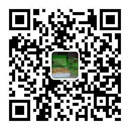 贵港市港北区黑天鹅养殖场黑天鹅养殖技术