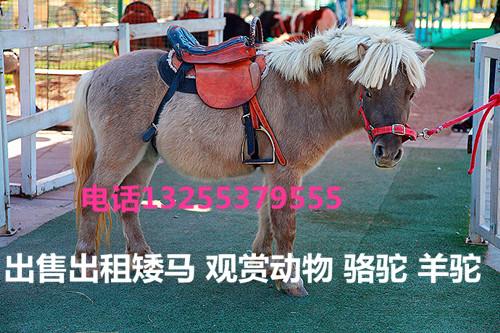 山东什么地方能买到羊驼景区照相用的骆驼多少钱一只