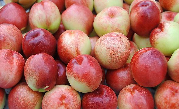 辉县嘎苹果大量上市
