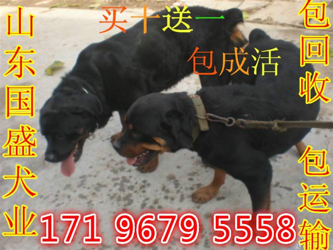 哪里有卖马犬的湖北潜江有狗场吗_云南商机网月博信息