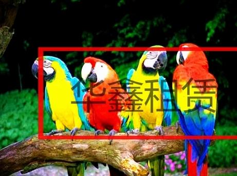 马戏团表演-四川会东县-杂技表演招商_山东养殖动物
