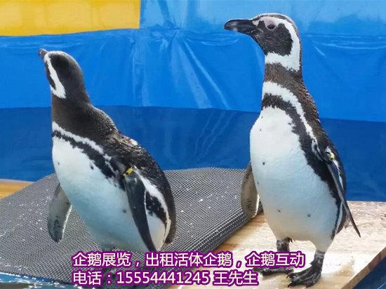出租海狮表演:动物表演节目-天门市