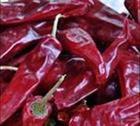 大批发大批价北京红油椒等辣椒