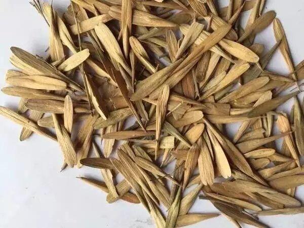 辽宁省白蜡种子  东北白蜡种子   吉林省白蜡种子