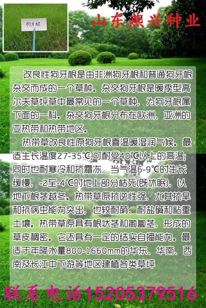 草坪草种类型山东燕兴种业