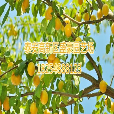 杏树嫁接时间在几月
