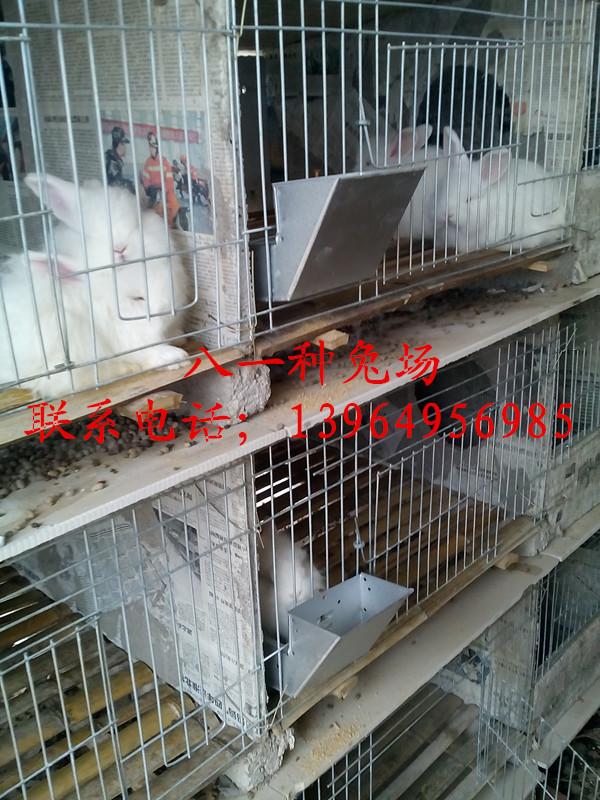 乐昌市野兔基地那里的种兔