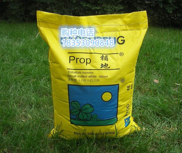 杭州绿化草坪种子什么发芽快