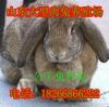 申扎县养兔效益分析、养兔基地9