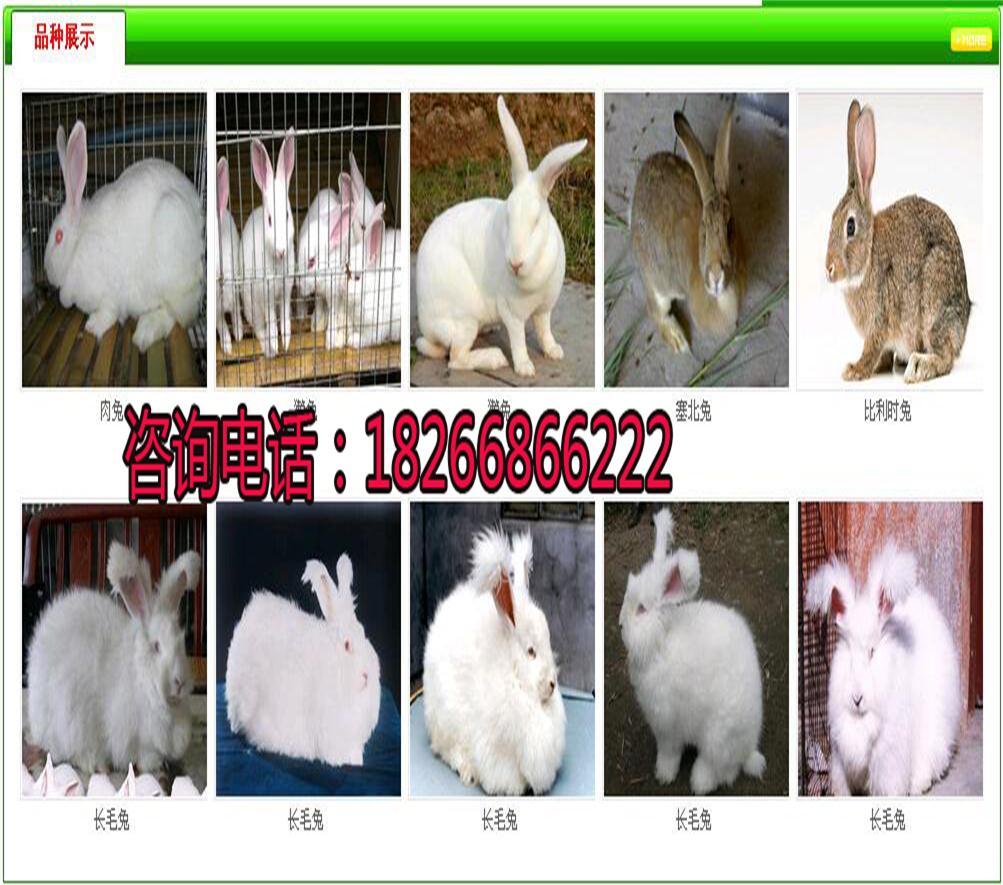 青山区哪里卖兔子、哪些地方出售种兔