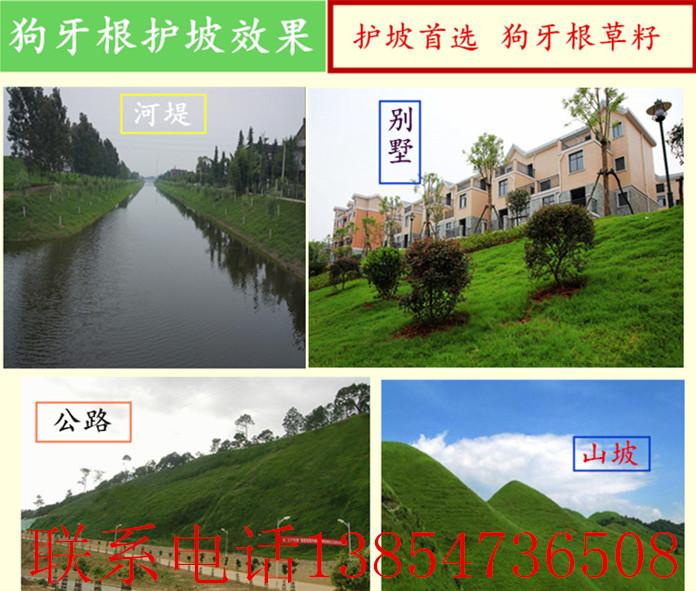 漳州市绿肥种子哪里有卖