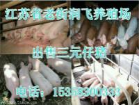 遂昌县崽猪养殖场电话15358300333