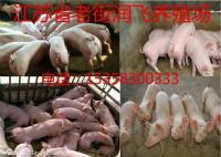 新民苗猪市场电话多少