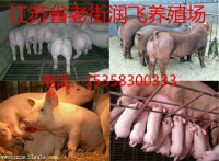 衡阳县苗猪市场电话多少