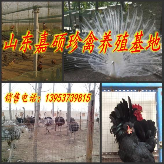 曹县马养殖场马养殖技术