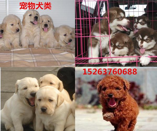 乐清附近哪里有小马犬养殖基地