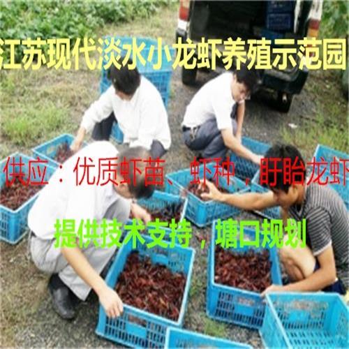 淡水小龙虾培育基地、提供小龙虾苗、虾苗、种虾、免费提供养殖技术