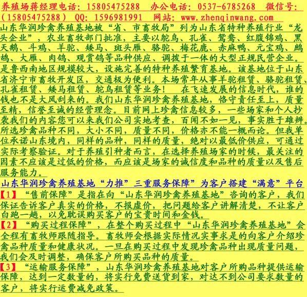 阳山县孔雀蛋多少钱一个