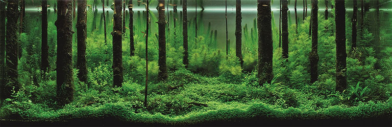 湖南长沙大型鱼缸中怎么养殖水草