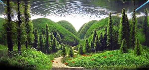 湖南长沙生态大型鱼缸水草药剂