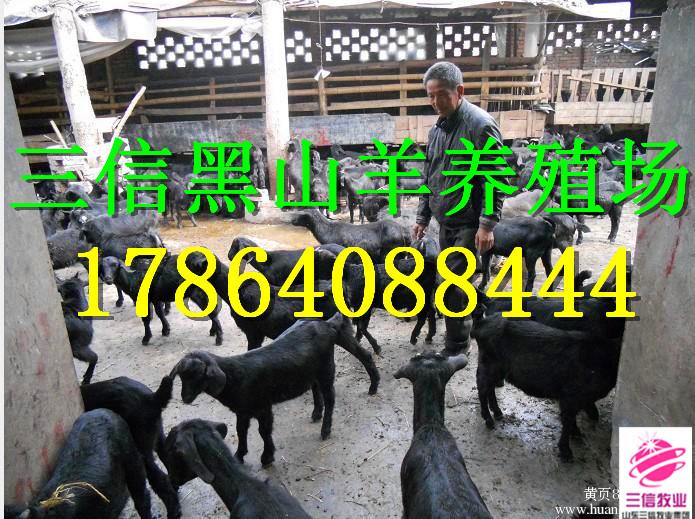 奉节县羊市镇什么地方有大型的杜泊绵羊养殖场