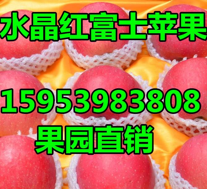山东红富士苹果招商联系苹果价格行情_云南商机网月博信息